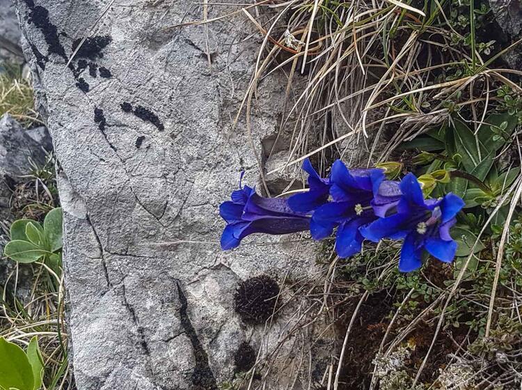 Blumenwelt Wanderung Am Tegernsee