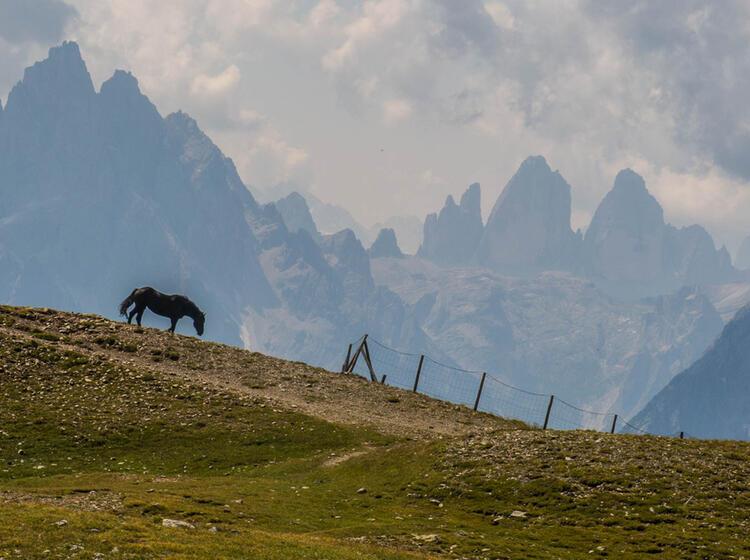 Die Drei Zinnen Kommen In Den Blick Auf Der Gefuehrten Alpenueberquerung