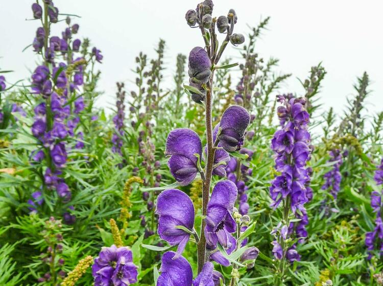 Flora Und Fauna Auf Der Alpenueberquerung