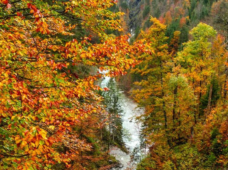 Herbstwandern Im Allgaeu Auf Der Steinbocktour