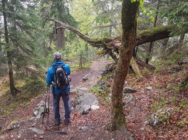 Tegernsee Wandern Alpine Welten
