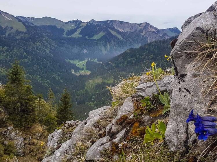Traumhafter Ausblick Auf Tegernseer Berge Mit Alpine Welten