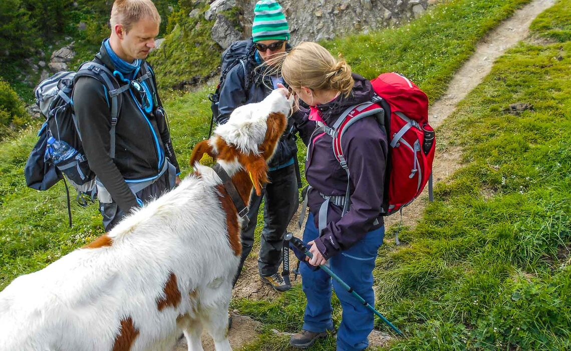 Wandern Von Huette Zu Huette Auf Der Alpenueberquerung
