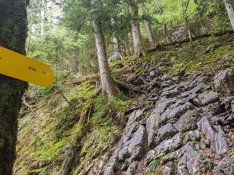 Wanderweg Leonhardstein Tegernsee Wanderfuehrer